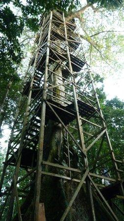 La Selva Amazon Ecolodge: Vogel-Beobachtungsturm