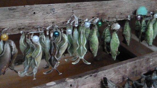 La Selva Amazon Ecolodge: Damit verdient man auch Geld: Schmetterlinge