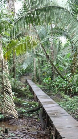 La Selva Amazon Ecolodge : Ausflugs-Stege