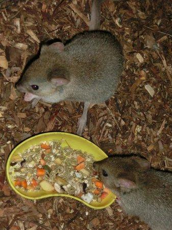 Bonorong Wildlife Sanctuary: So cute