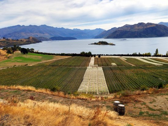 Rippon Vineyard: View from tasting room