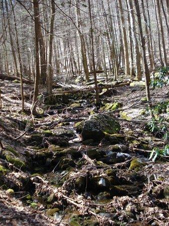 Vogel State Park: Creek running along Coosa Trail