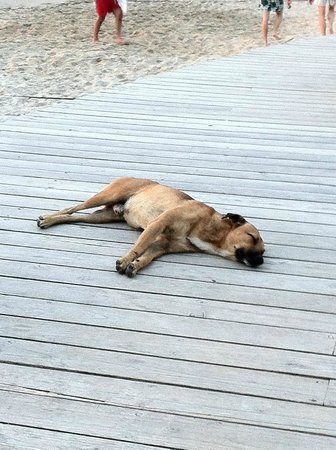 The BodyHoliday, LeSport : Resort dog