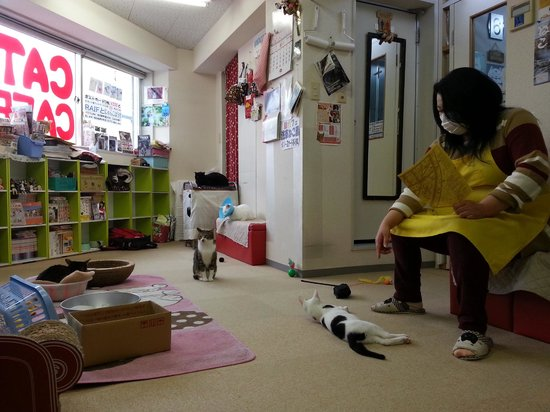 Cat cafe ASAKUSA NEKOEN: The owner playing with her babies.
