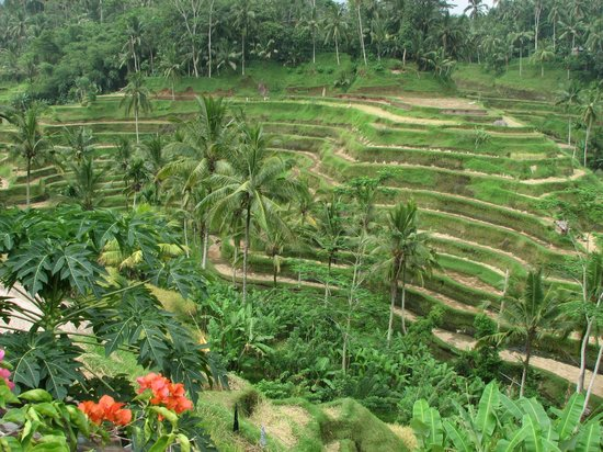 Ayung Resort Ubud: nice