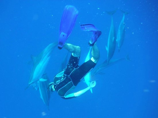 Espace Plongee: Swimming with the dolphins