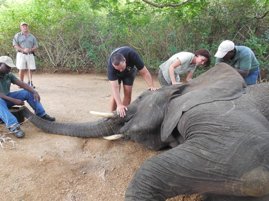 Elephant Whispers: interaction