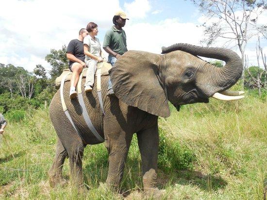 Elephant Whispers: balade