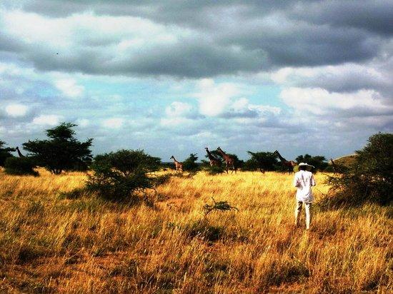 Maasai Simba Camp: Прогулка с жирафами