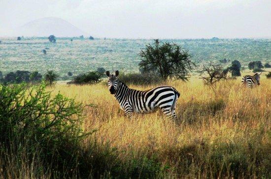 Maasai Simba Camp: Зебра