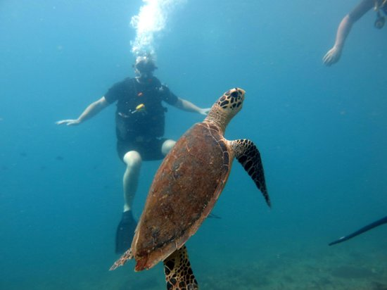 No Gravity Dive Center: scuba divning