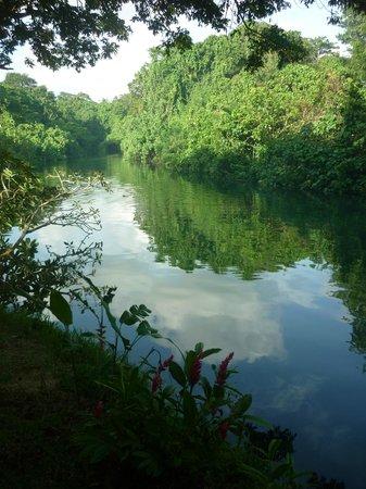 Vanuatu Ecotours: The river