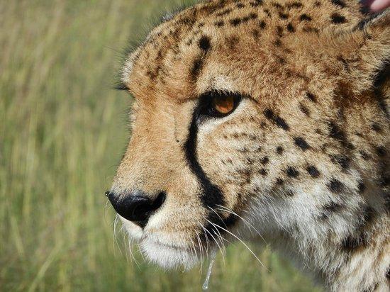 Lion and Safari Park: beauté féline