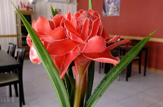 Apricot House , Inspire Star Co., LTD : Dalar flower from our back yard garden