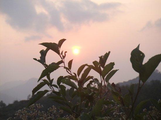 Mt Ampacao: fading
