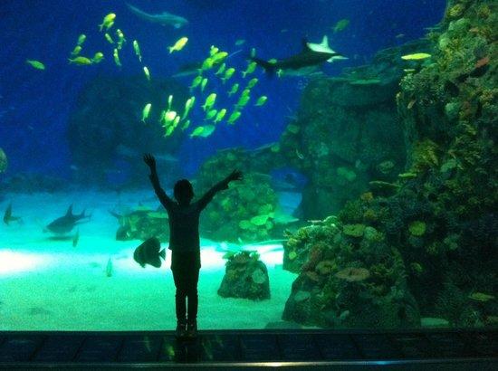 Large aquarium - Foto di Den Bla Planet, National Aquarium Denmark ...