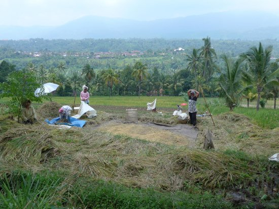 Mayong Village Tracking Experience: photo taken of the villagers drying the rice
