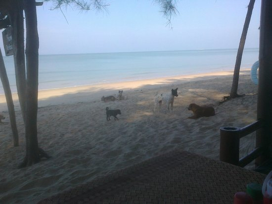 Pranee Beach Bungalows: fine if you like dogs for breakfast