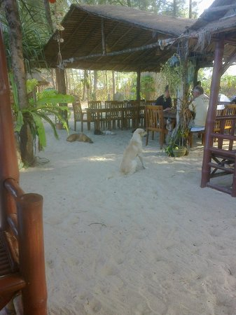 Pranee Beach Bungalows: it is not the fault of the dog but the staff