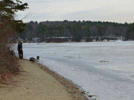 Walden Pond State Reservation : frozen Walden Pond