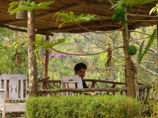 Tathagata Farm: The Papaya Tree