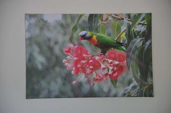 Kookas Bed & Breakfast: Rainbow Lorikeet painting