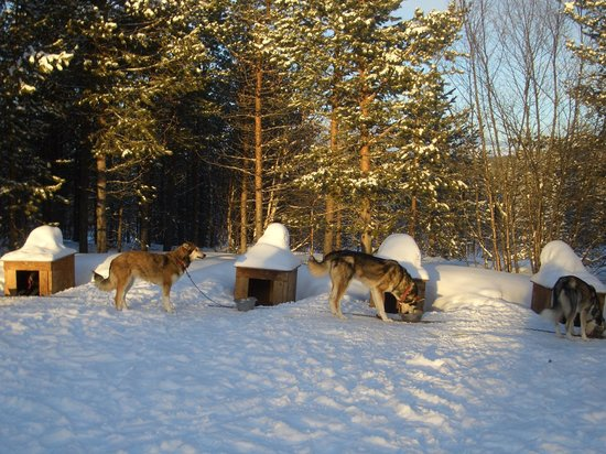White Trail Adventures: Dogs in sunshine at Wilderness lodge