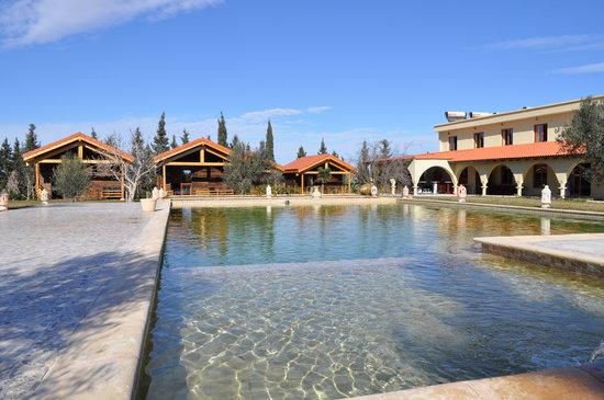 Ecolodge Dar Zitouna : Swimming pool