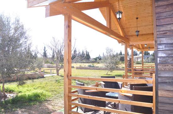 Ecolodge Dar Zitouna : Terrace