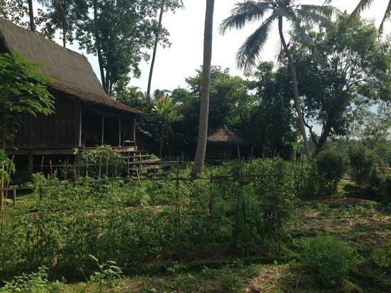 Bambu Indah: gardens