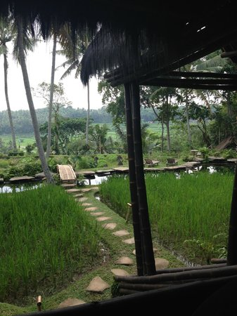Bambu Indah: view from main hall, water is the pool!