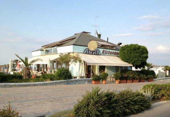 Ristorante bar anna misano adriatico ristorante recensioni numero di telefono foto - Bagno calypso misano ...