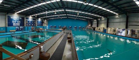 The Australian Shark & Ray Centre: Shark and Ray Centre - Dandenong