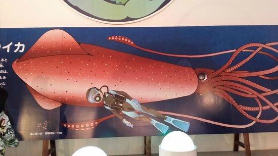 Firefly Squid Museum: ほたるいかミュージアム
