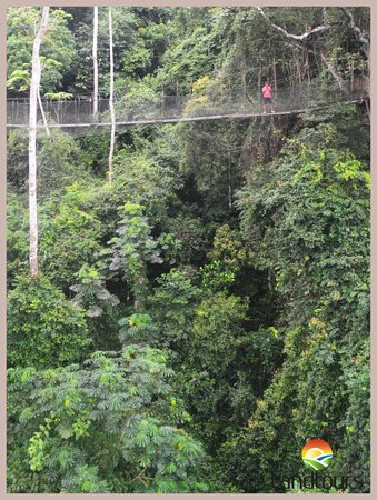 Landtours Ghana - Day Tours Canopy Walkway in Kakum National Park Central Region & Canopy Walkway in Kakum National Park Central Region Ghana ...