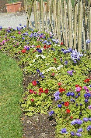 Mesmerizing Harlow Carr Gardens  Picture Of Rhs Garden Harlow Carr  With Engaging Rhs Garden Harlow Carr Anemones At Rhs Harlow Carr With Amazing Kew Gardens Volunteer Also Garden Furniture Sale Clearance In Addition Bayview Gardens And Green Garden Organic Recipe As Well As Garden Pergolas Ideas Additionally Garretts Green Garden Centre From Tripadvisorcom With   Engaging Harlow Carr Gardens  Picture Of Rhs Garden Harlow Carr  With Amazing Rhs Garden Harlow Carr Anemones At Rhs Harlow Carr And Mesmerizing Kew Gardens Volunteer Also Garden Furniture Sale Clearance In Addition Bayview Gardens From Tripadvisorcom