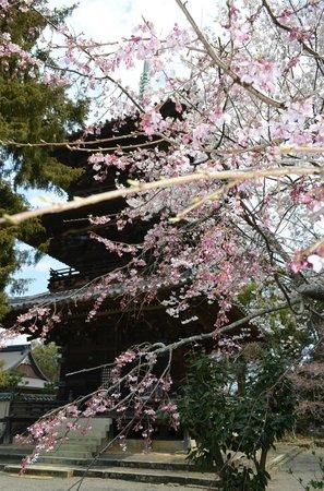 Hidakagawa-cho, Япония: 三重塔