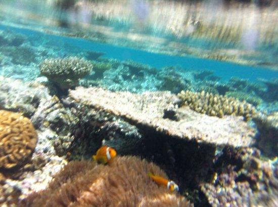 Bandos Maldives : cute
