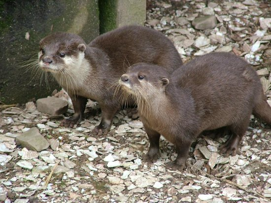 Galloway Wildlife Conservation Park: Otters - March 2014