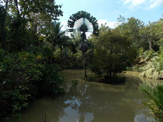 Sepilok Jungle Resort: Garden view