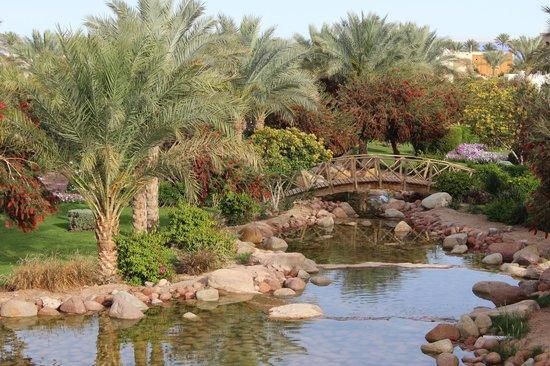 Aurora Oriental Resort Sharm El Sheikh : garden