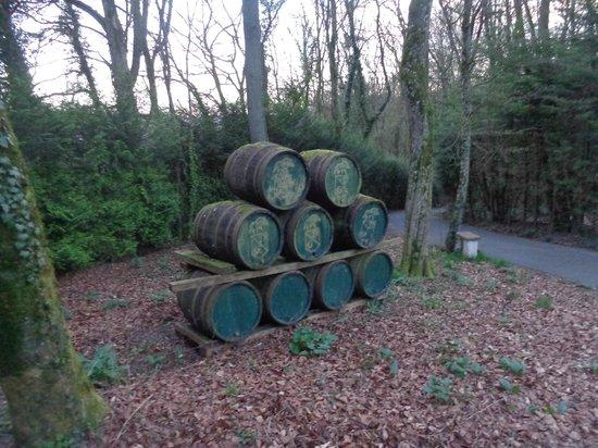 Distillerie Guillon: Fûts de chêne