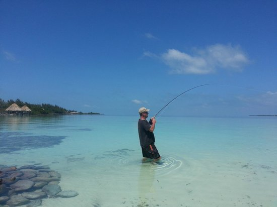 Coco Plum Island Resort: Fly fishing from the beach