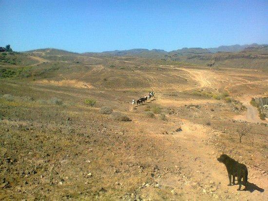 El Salobre Horse Riding: Zalig!