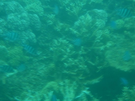 Great Barrier Reef Picture Of Quicksilver Cruises Port