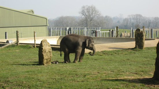 ZSL Whipsnade Zoo: Elephant Compound