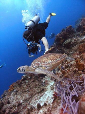 Presidente Inter-Continental Cozumel Resort & Spa : Photo of my husband diving with a sea turtle