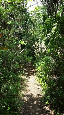 Hugh Taylor Birch State Park : Nature Trail