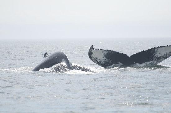 Cafe Chez Sam : Baleine et baleineau