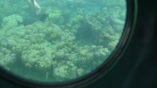 Palau Pacific Resort: シュノーケルは時が立つのも忘れます。